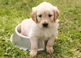 Dermatitis en perros. También en primavera - HeelVet
