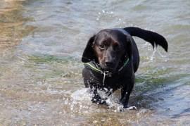 Varias son las causas de la tos de las perreras - HeelVet