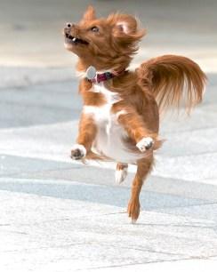 Se puede aliviar los síntomas de la tos de las perreras - HeelVet
