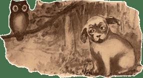 Propiedades relajantes de pasiflora: beneficio para la ansiedad de nuestra mascota - HeelVet