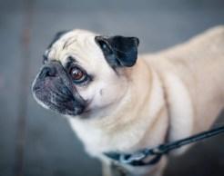 La tos de tu mascota - HeelVet