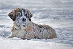 Artrosis en perros: complicaciones con el invierno - HeelVet