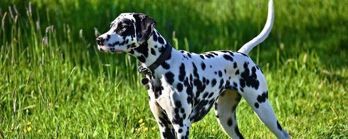 escoger un collar y arnes ideal para tu perro