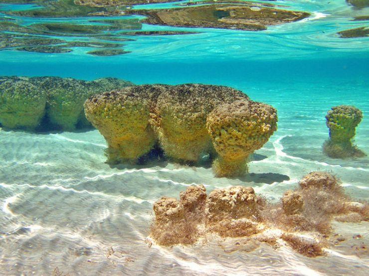 En Bacalar hallarás la forma de vida más antigua: sus estromatolitos  (FOTOS) -Más de México