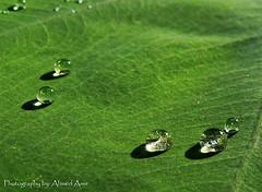 photo credit: © Ahmed Amir via photopin cc