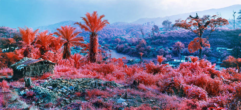 Un'immagine della serie INFRA © Richard Mosse, Hombo, Walikale, eastern Democratic Republic of Congo, 2012. Courtesy of the artist and Jack Shainman Gallery, New York.