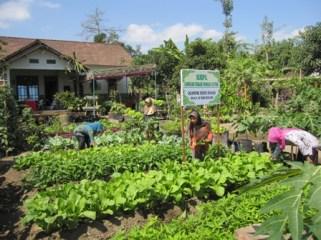 Melalui KRPL, pekarangan bisa jadi penyedia kebutuhan pangan keluarga
