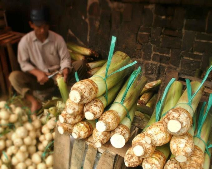 Talas Bogor