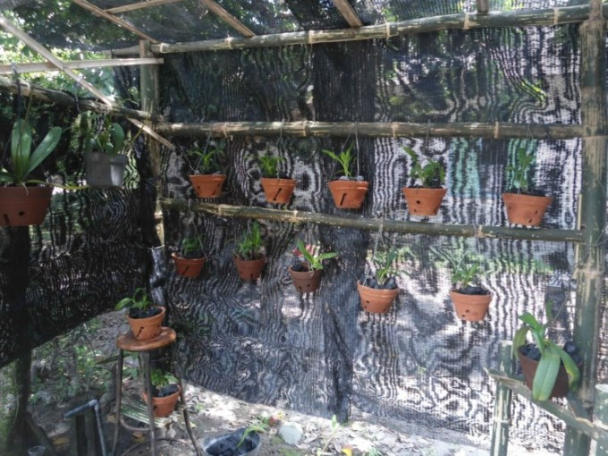 Rumah Lindung Bunga Anggrek