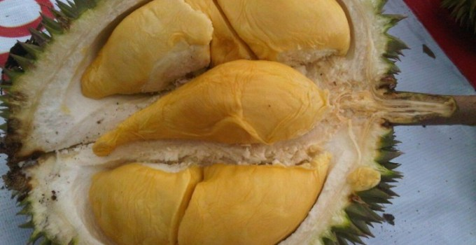 Durian bhineka bawor Banyumas