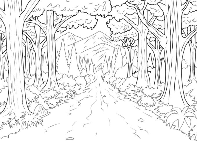 Sketsa hutan belantara