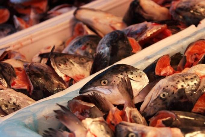 Ikan dalam sterofoam