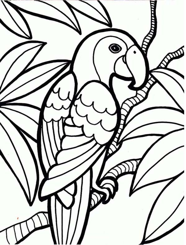 sketsa burung beo