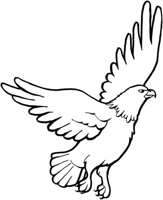 sketsa burung elang