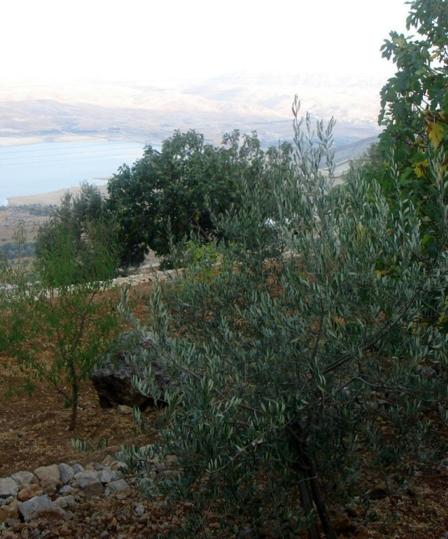 The orchard overlooking the Litani river, by Juliet Daher Bory