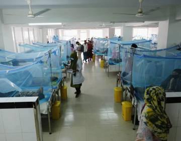 Dengue spreads dangerously in Peshawar