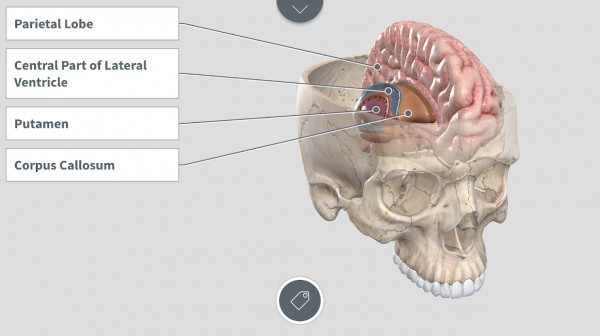 10 Android Apps to Learn Human Anatomy | Mashtips