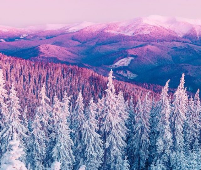 White Snow Tree Iphone Wallpaper