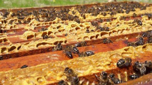 Apicultura conservadora y sostenible en Masia Can Sagrista, sl. La apicultura sostenible es aquella que no quiere que el beneficio que se saca de la colmena cree un daño a las abejas o sea agresivo hacia el medio ambiente.