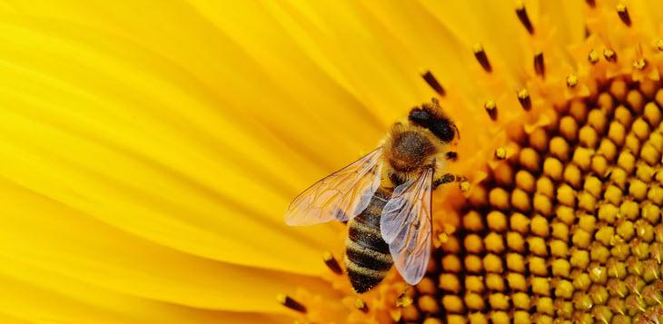 Taller de apicultura para familias irganizado por Masiacansagrista