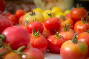 Muestra de tomates Aguilar