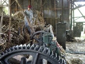 36 Triturado de la caña (fábrica familiar)