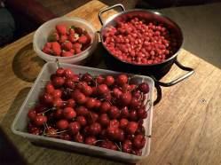 26 Cosecha de frutos rojos