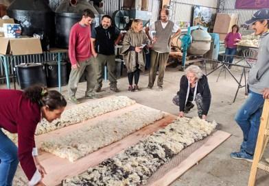 Utilizan lana de oveja de descarte como aislante natural térmico en viviendas