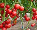 El desafío de producir más alimentos con menor impacto ambiental