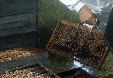 Destacan la alta calidad de las mieles pampeanas