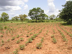 Tolotama reforestation, Burkina Faso.