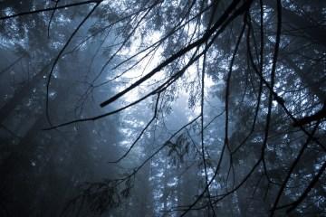 Skogen som kraftkälla, tempel och andlig oas