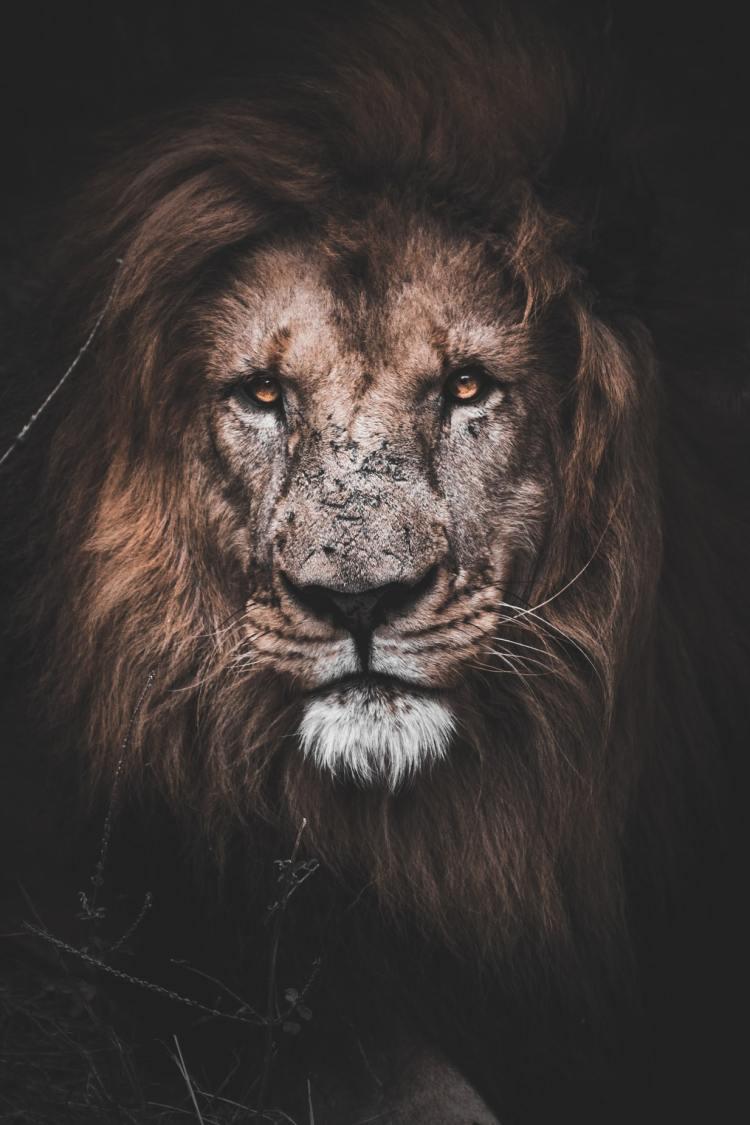 Släpp dina förväntningar och bli ett stoiskt vilddjur