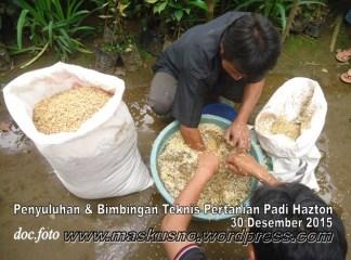 Penyuluhan dan bimbingan tehnis padi hazton (5)