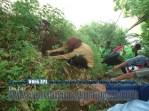 Bina Lingkungan dan Menanam Tanaman Konservasi Sempadan Sungai Serayu desa Pegalongan Patikraja Kabupaten Banyumas (3)