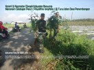 Koramil 23 Cilongok Banyumas Menanam Glodogan di Turus Jalan Desa Panembangan Cilongok (6)