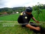 Penghijauan Desa Randegan Kecamatan Kebasen Banyumas Dalam Rangka Keanekaragaman Hayati 2016 (23)