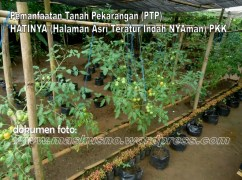 Pemanfaatan Tanah Pekarangan(PTP) Program PKK (16)