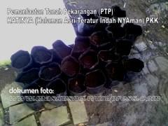 Pemanfaatan Tanah Pekarangan(PTP) Program PKK (5)