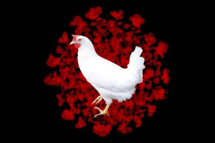 Cómo COVID-19 transformará la industria avícola