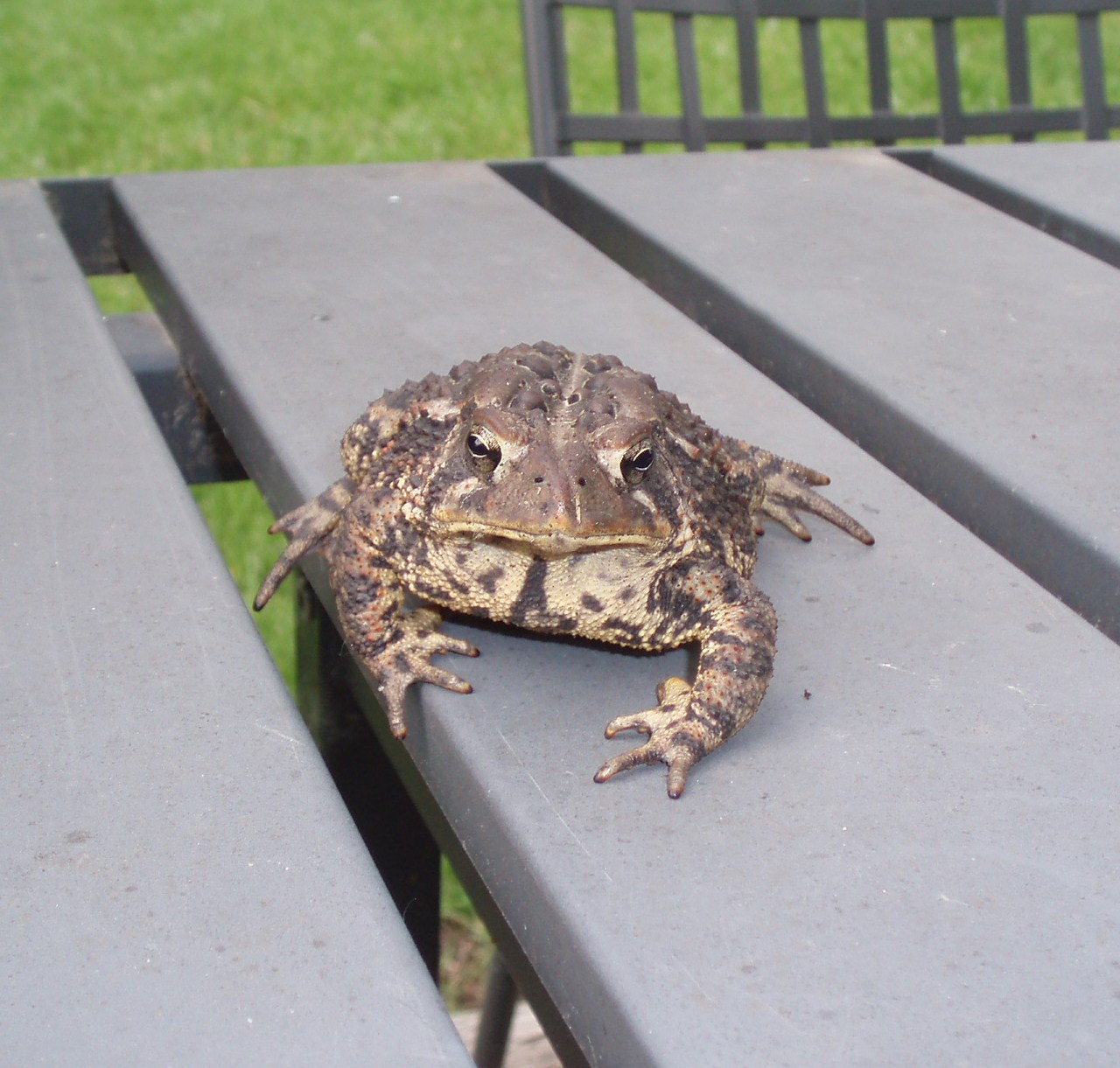 Action Toad!