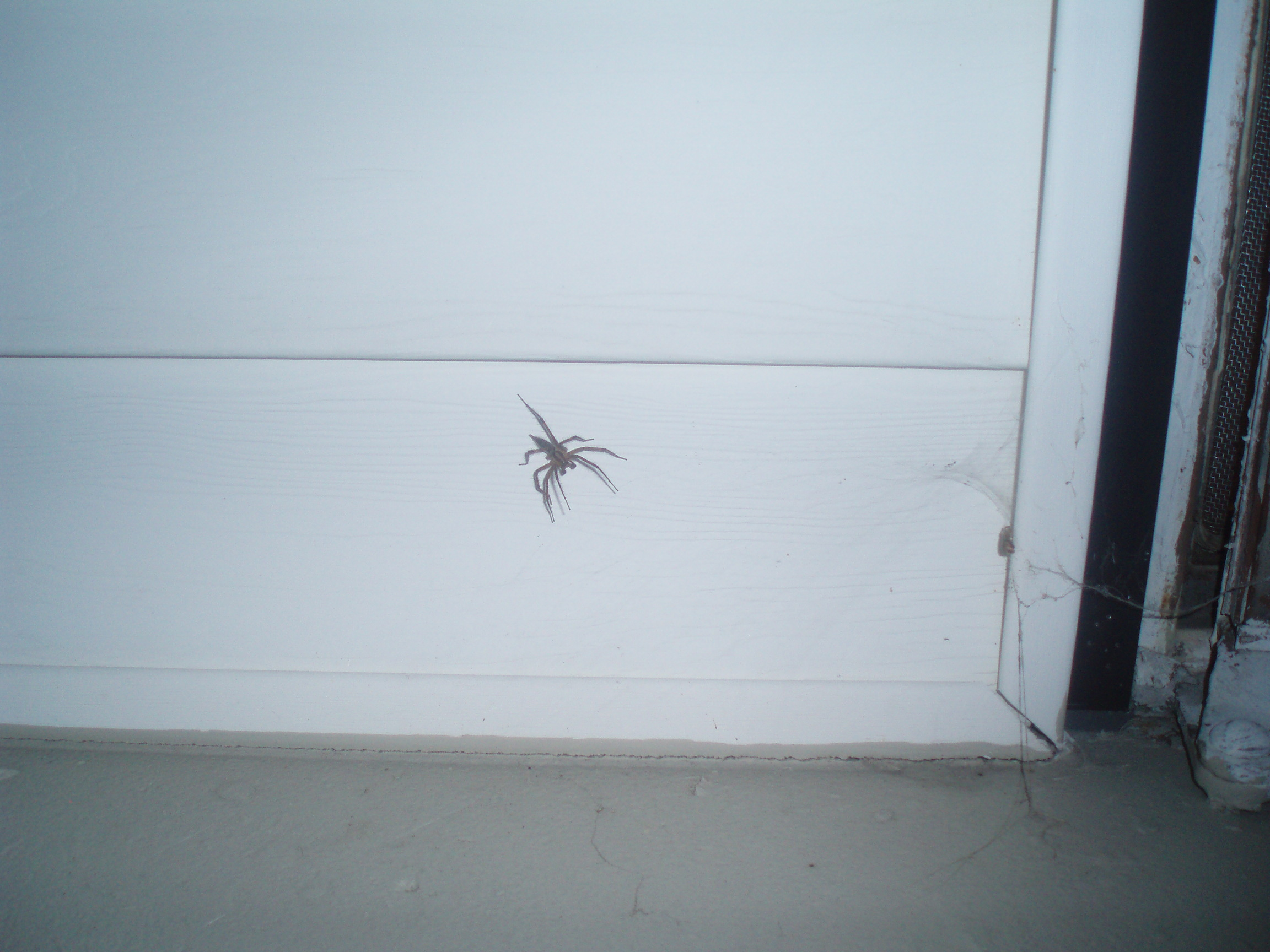 Giant, creepy spider waiting on the wall to grab our leftovers. Yes, there were leftovers. Hard to believe, I know.