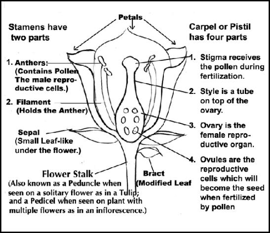 flower pollination diagrams
