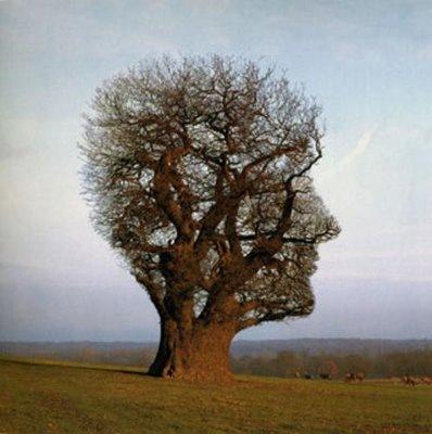 árbol del conocimiento
