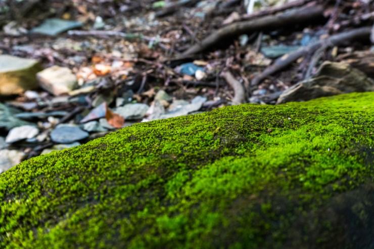 Nature_5