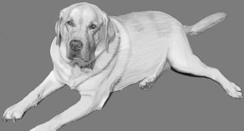 Gus sketch