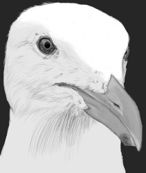 seagull head sketch