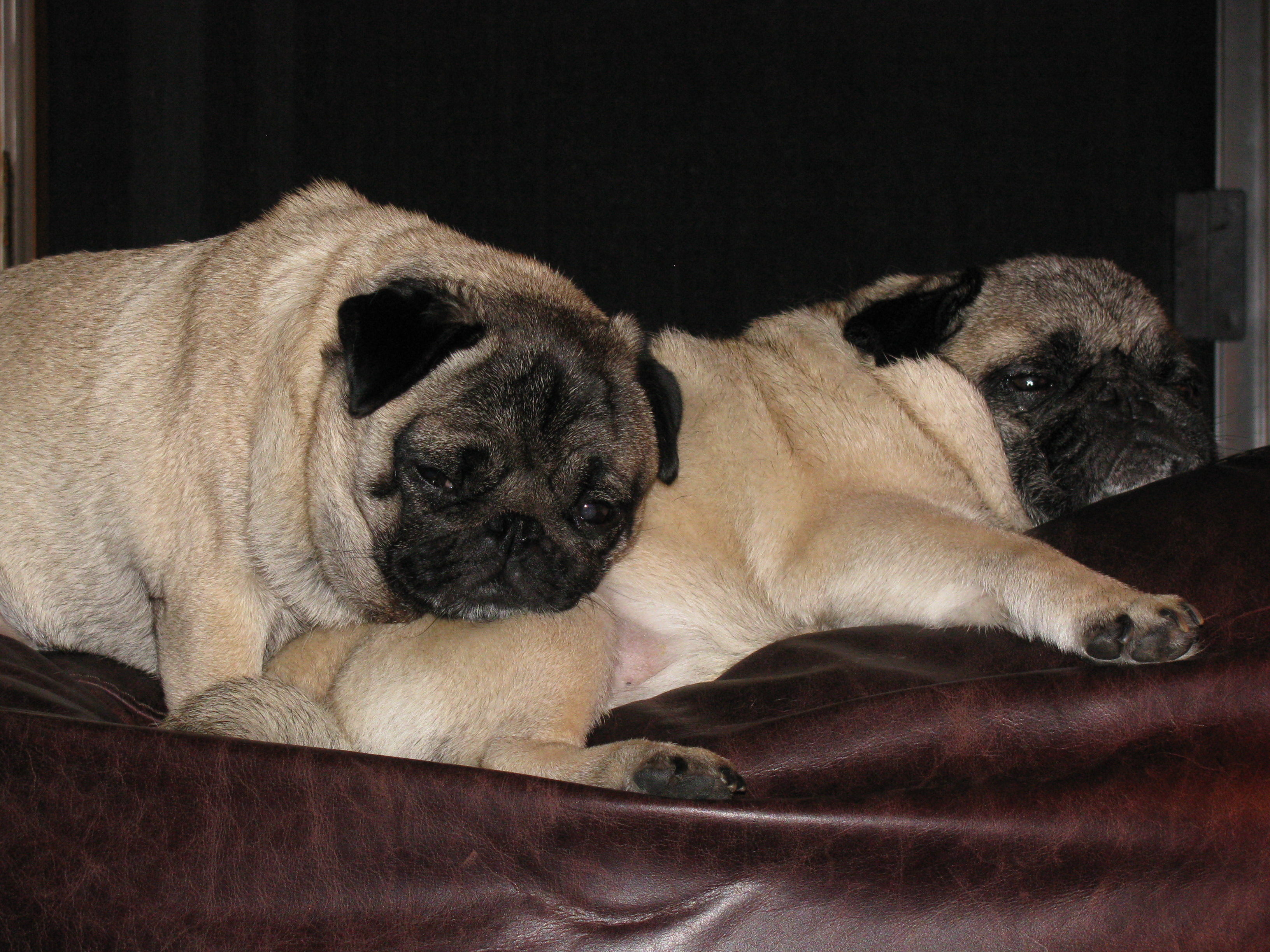 Caught again by that d--- pug cam in our most compromising and intimate of positions!