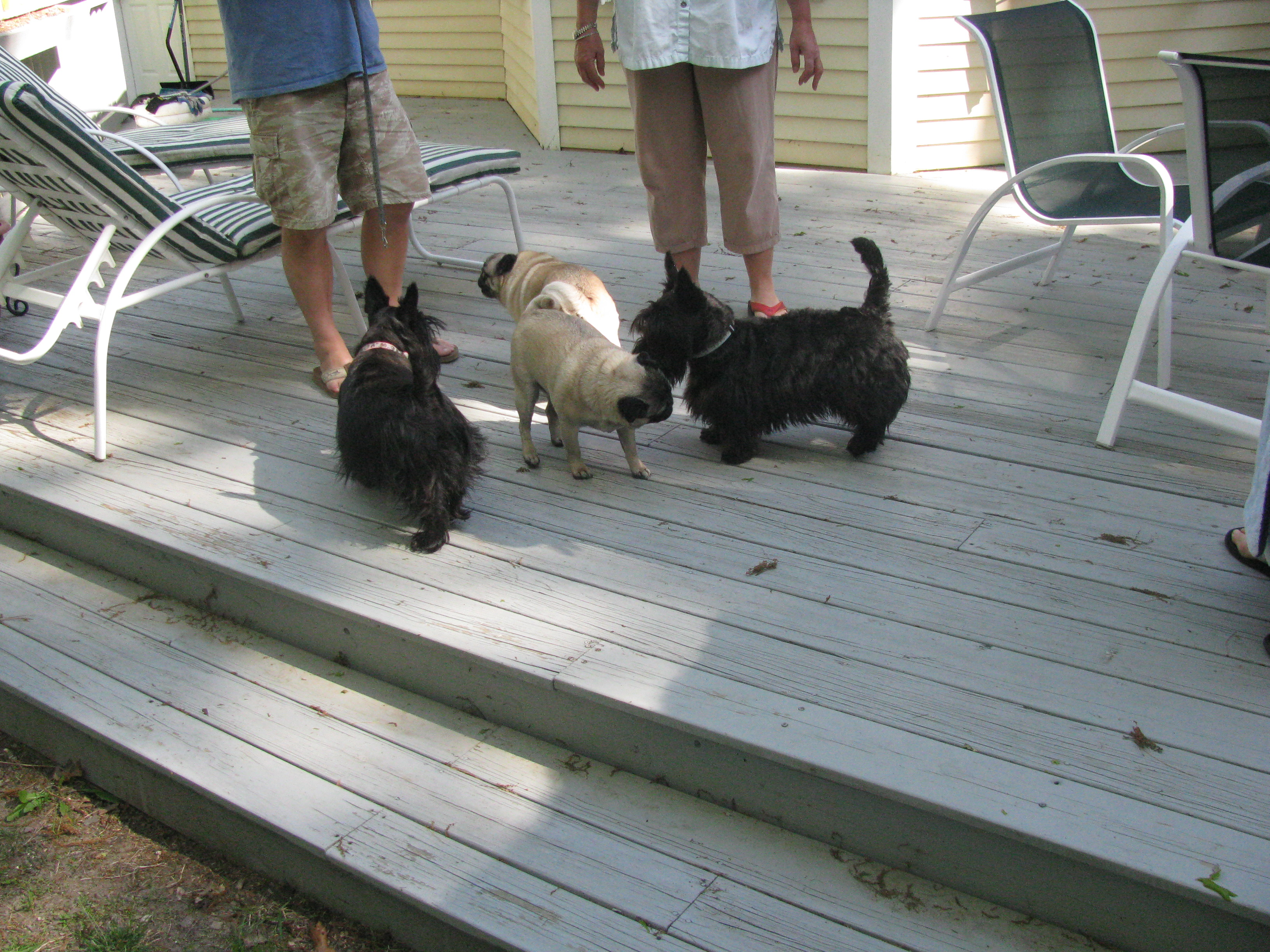 You can see the pug/Scottie interaction here. This is before it became ugly.