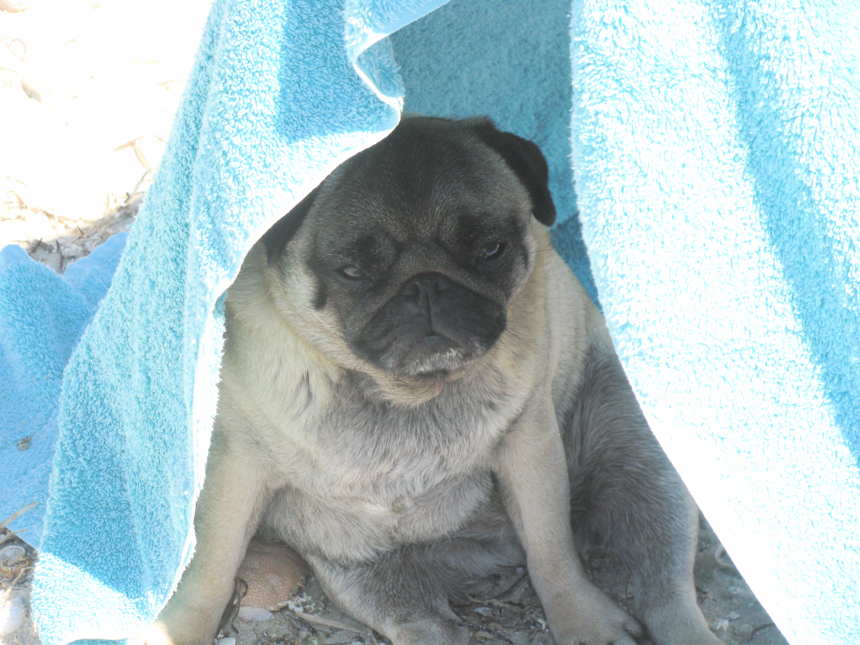 Here I am in my shelter by the sea.